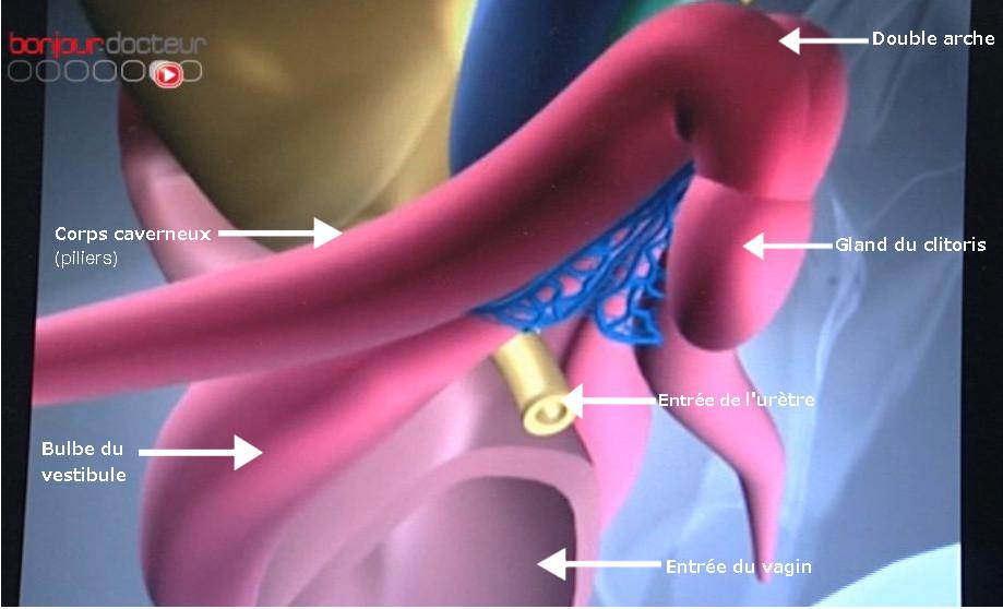 12407-anatomie_clitoris